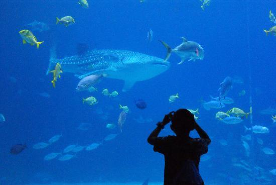 Aquaworld Aquarium in Crete is among the top aquariums in the world ...