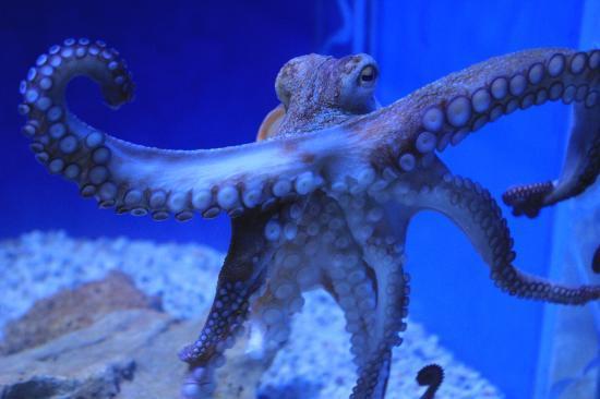aquaworld aquarium