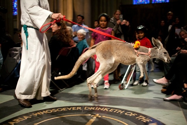 Pets go to Church for Blessing of the Animals (photos +