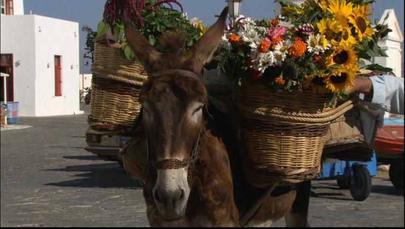 An Ode To The Greek Donkey Photos Animation