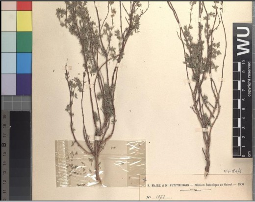 743583_Herbarium_WU_Institute_of_Botany,_University_of_Vienna_-1-.png