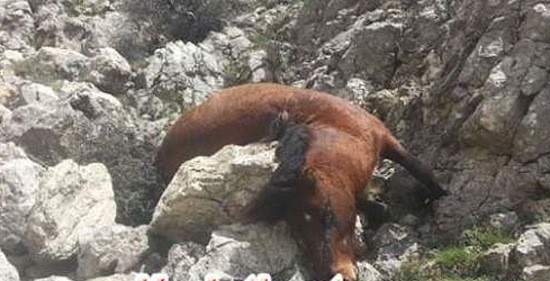 26 Wild Horses Shot Dead Motive Unclear Protothemanews Com