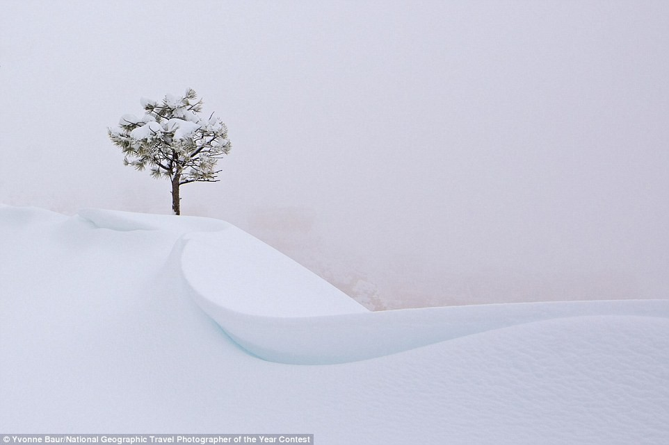 33D5E32500000578-3573526-During_a_snowstorm_in_Bryce_Canyon_Utah_a_tree_cuts_a_lonely_fig-a-124_1462378107027