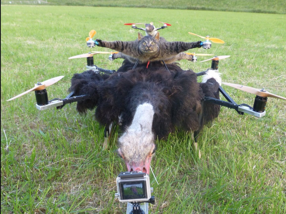 remote control helicopter for 6 year old with Man Turns Pet Cat Into Flying Drone Photosvideos on Fur Bean Bags besides Automated Safety Hitch System Problems as well 3000 Year Old Hieroglyphics Depict also Man Turns Pet Cat Into Flying Drone Photosvideos likewise Super Mario Coloring Pages.