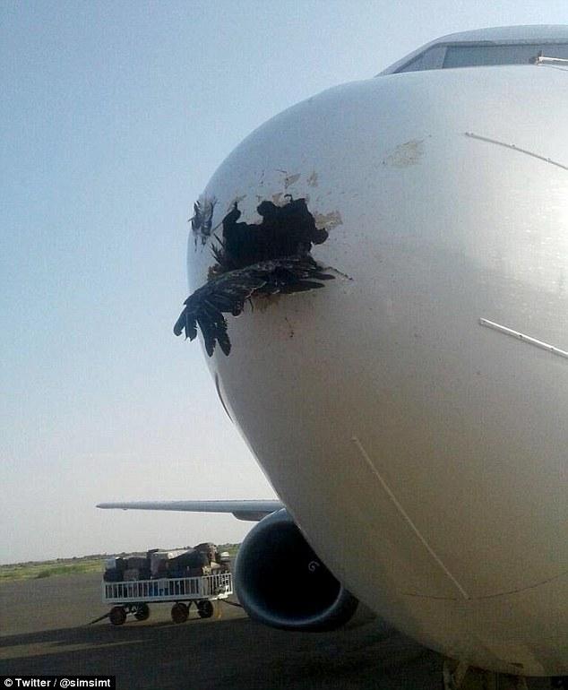 Bird Crashes Into A Plane In Sudan