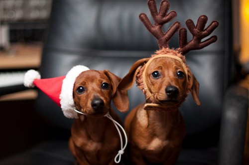 20 1 Animals In Christmas Mood Funny Photos Protothemanews Com