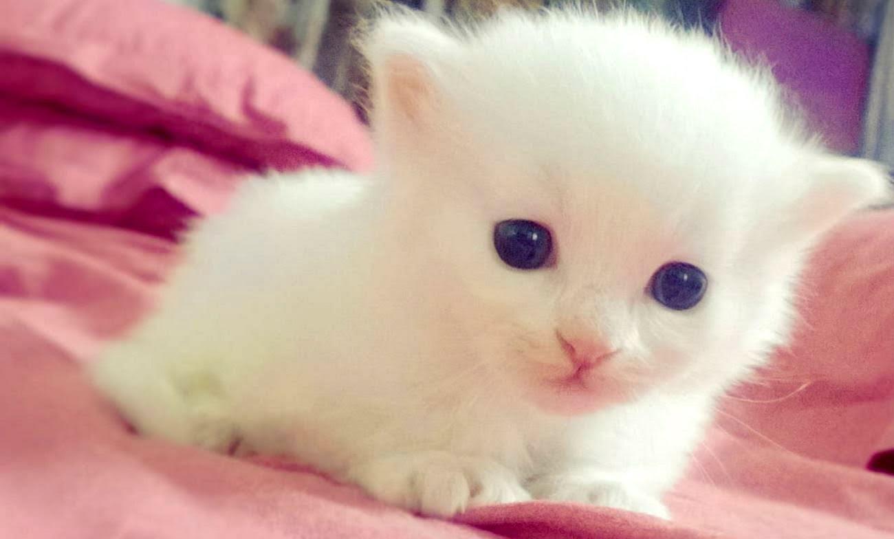 unbelievably cute animals! (adorable photos) | protothemanews