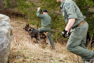 A canine unit with the West Virginia State Police assists U.S. Special Operations Forces and interagency joint partners with the West Virginia and Pennsylvania National Guard in partnering with special operations forces soldiers from Estonia, Latvia, and Lithuania in an escape and evasion training exercise event as part of Exercise Ridge Runner Feb. 23, 2017 in West Virginia. Ridge Runner is an exercise hosted by the West Virginia National Guard involving U.S. and NATO special operations forces focused on unconventional warfare. (U.S. Army photo by Sgt. 1st Class Jeff Smith)