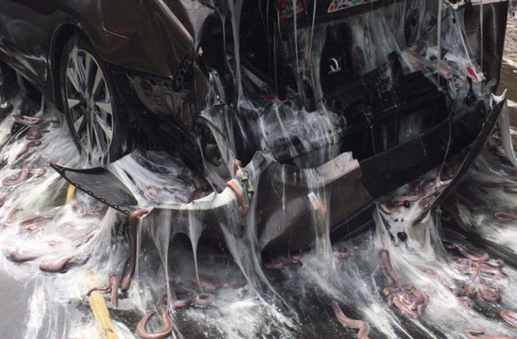 Slimy Eel Car Accident