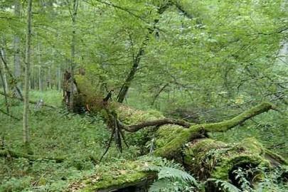 Poland-Bialowieza-Forest