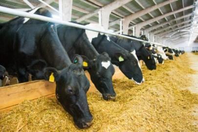 Cows_feeding_farm_CREDITSGr_Shutterstock-800x450
