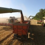 Combine harvesters load trucks with wheat grain during the summer wheat harvest on a farm operated by Kuban Agroholding, a unit of Basic Element Co., in Ust-Labinsk, Russia, on Sunday, June 26, 2016. Russian wheat-export prices dropped to a six-year low last week as prices in major competitors such as the U.S. and France fell and harvesting of a bumper crop was about to start. Photographer: Andrey Rudakov/Bloomberg