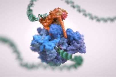 extra_large-1516382672-the-rna-polymerase-iii-complex-is-seen-here-unzipping-the-dna-strand