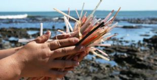 straws-on-beach-by-EcoStraws-310x158