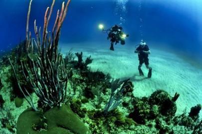 divers-681516_960_720-e1519280510589