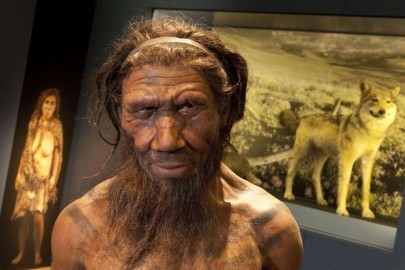 AN38500238Neanderthal-model
