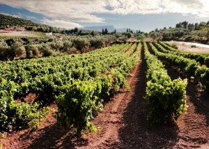 Nemea_vineyards_s42300247_560