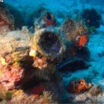 Ancient Greek shipwreck treasure trove found in Aegean Sea (video)
